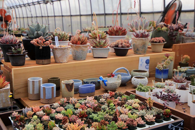 多肉ハウスUnicaにて植木鉢を販売しています